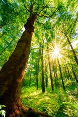 Fototapete - Wald im Frühling bei Sonnenschein