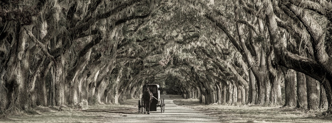 Horse drawn carriage on plantation, bw image