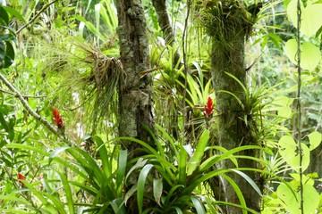 Dschungel von Kuba