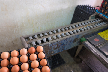 Eggs from hen farm in package and old weight scales machine for screening size.