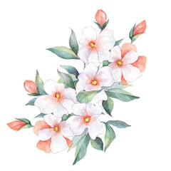 Watercolor bouquet. White flowers. Wedding, birthday, Valentine's Day, Mother's Day Isolated on white background