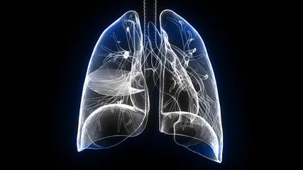 3d illustration human body lungs.human body organs
