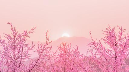 Sakura Cherry Blossom tree before sunset behiind the mountain , japan