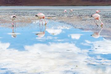 Flamingos mit Spiegelung im Bolivianischen Altiplano