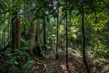 Mystischer Amazonas-Regenwald