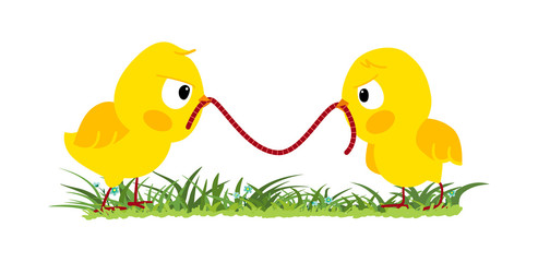 Two angry chicks fighting for a worm