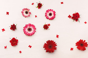 Roses, Gerbera and Kalanchoe flowers scattered on pastel background