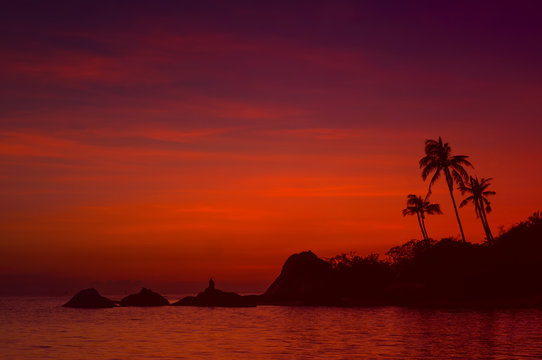 palm trees silhouette on sunset tropical beach background