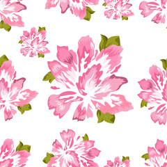 Pink peony on white background, vector. Illustration of a flower