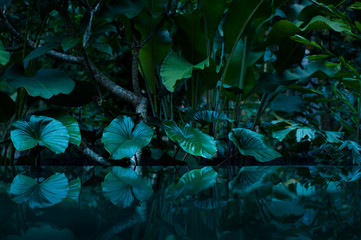 Photo sur Toile Forets tropical rain forest with water mirror