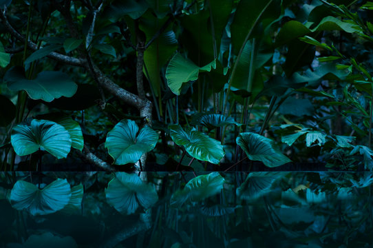 tropical rain forest with water mirror
