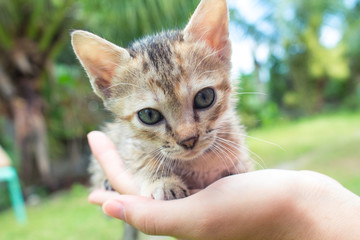 Small baby cat in female's hand. Summer garden background.