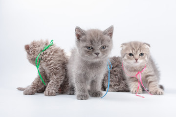 little kittens mixed breed on a white background.