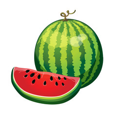 watermelon with a slice cut isolated on white background. vector illustration