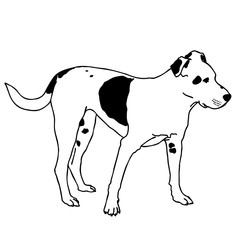 Black and white sitting dog. Smart and darling animal. Outlined cute dog. Flatten isolated master vector illustration.