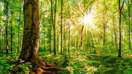 Wald im Frühling mit strahlender Sonne