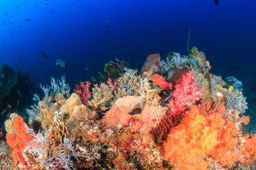 Beautiful, colorful soft corals on a healthy tropical reef