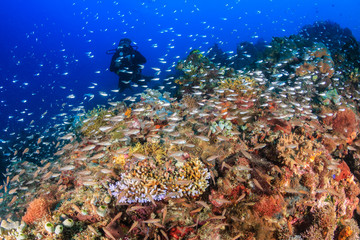 Tropical fish swarm on a healthy tropical coral reef