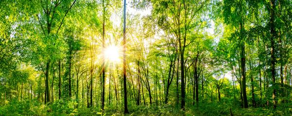 Wald Panorama mit durch Blätter leuchtenden Sonnenstrahlen