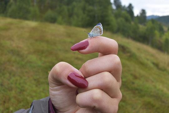 'Karner' Melissa Blue butterfly on a girl hand