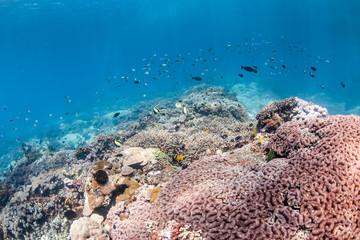 Shallow water corals and fish, Mangroves, Lembongan