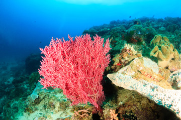 Colorful hard coral on a tropical reef