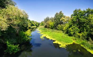The river among green trees