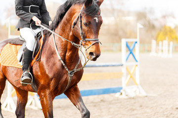 Bay horse with rider on show jumping competition. Image with copy space