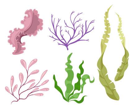 Sea plants and aquatic marine algae Seaweed set vector illustration. Yellow and brown, red and green aquarium