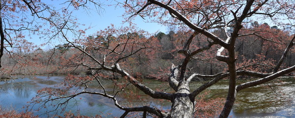 Red maple tree over the lake in Wall Doxey State Park Mississippi