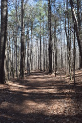 Hiking trail in Wall Doxey State Park, Mississippi