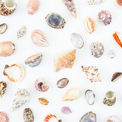 Beautiful ocean shells on white background. Flat lay. Top view. Natural pattern.