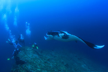 Scuba dive with manta ray