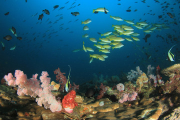 Coral reef underwater. Scuba dive in ocean. Sea fish on colourful reef