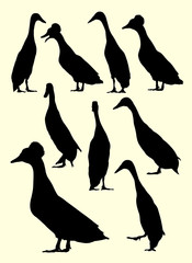 Ducks animal silhouette. Good use for symbol, logo, web icon, mascot, sign, or any design you want.