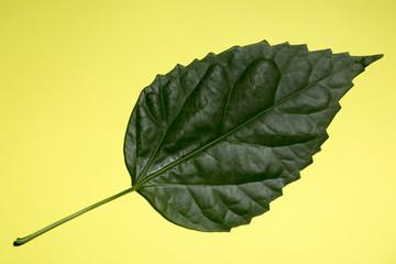 Зелёный лист растения на жёлтом фоне