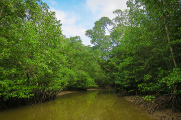 Mangrove Forest River Tour in Palawan
