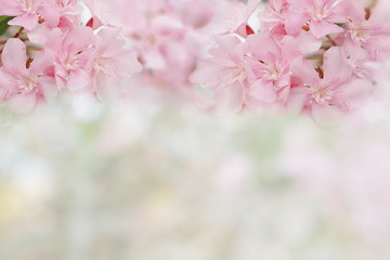 pink spring flowers on spring bokeh background with copy space for text