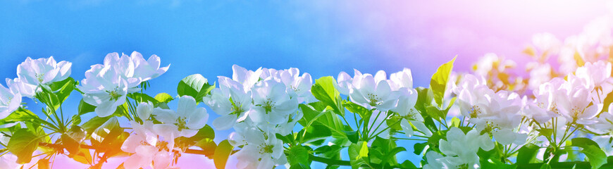 Bright colorful spring flowers