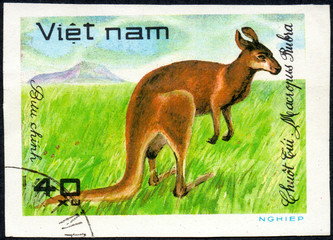 VIETNAM - CIRCA 2017: A Stamp printed in Vietnam shows Red kangaroo Macropus Rubra, series Animals, circa 1981
