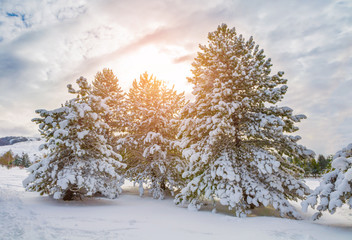 Winter landcape with snow covered trees on sunset