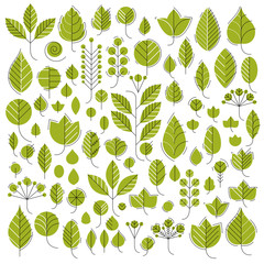 Vector illustration of green tree leaves isolated on white background. Set of simple drawn nature design elements, graphic symbols made in ecology theme.