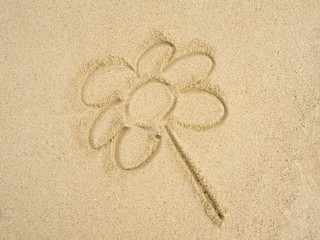 Flower on sand