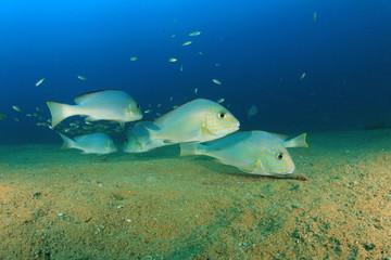 Underwater fish in ocean