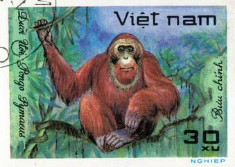VIETNAM - CIRCA 2017: A Stamp printed in Vietnam shows monkey Orangutan Pongo Pygmaeus, series Animals, circa 1981