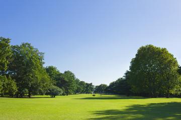 公園 芝生広場