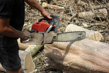 Workers are using a chainsaw sawing trees with sawdust around.