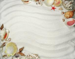 sea shells on sand beach summer beach background