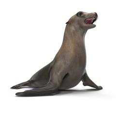 Sea Lion on white. 3D illustration