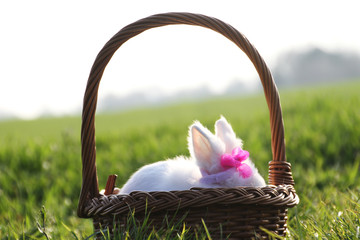 Little white rabbit in a basket